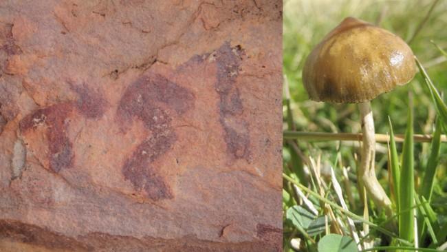 selva comparison psilocybe mushrooms