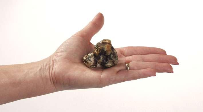 microdosing magic truffles